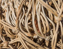 Networking. Braided cord knotted on behalf of a fishing net at sea Royalty Free Stock Photography