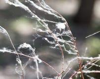 Netz auf den Niederlassungen eines Baums Lizenzfreie Stockfotografie