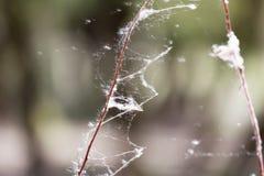 Netz auf den Niederlassungen eines Baums Lizenzfreie Stockbilder
