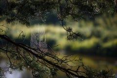 Netz auf den Niederlassungen von den Bäumen ausgedehnt lizenzfreies stockfoto