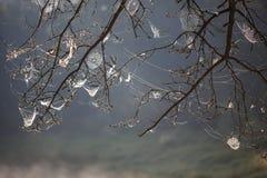 Netz auf den Niederlassungen von den Bäumen ausgedehnt stockfoto