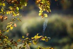 Netz auf den Niederlassungen von den Bäumen ausgedehnt stockfotos