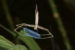 Netz-Casting Spinne Stockbilder