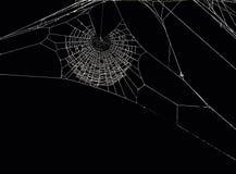 Netz der Spinne Stockfotografie