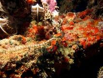Netz Pipefish Lizenzfreie Stockbilder
