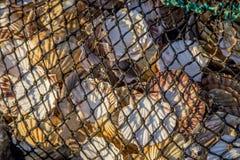 Netz voll von Seeoberteilen Stockfotos