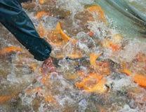 Netz von Fischen lizenzfreie stockfotografie