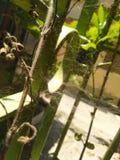 Netze der Spinne lizenzfreies stockbild