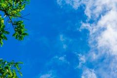 Netzfrühlingsdschungel-Rahmenfahne Grüne Blätter gegen blauen weißen Himmel, weiße Wolken Sonnenlicht, das durch kommt Realistisc stockfotografie
