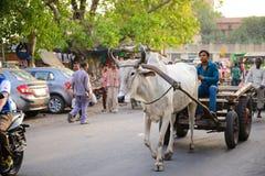 Neu-Delhi, Indien - 16. April 2016: Nicht identifizierte Leute reiten einen Ochsenwarenkorb in der Mitte von Neu-Delhi, Indien Lizenzfreie Stockbilder