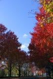 Neu-England Fall in Gloucester, Massachusetts Lizenzfreie Stockfotografie
