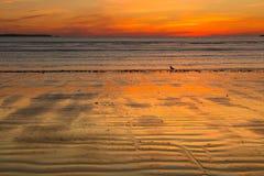 Neu-England Herbstsonnenaufgang am Strand stockbild