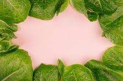 Neue belaubte Grüns als dekorativer Rahmen auf rosa Hintergrund Stockfotos