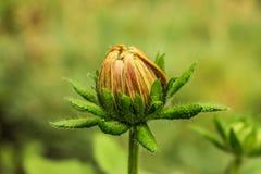 Neue Blume Lizenzfreie Stockbilder