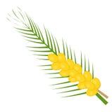 Neue Datumsikone flach, Karikaturart Gelbe Frucht lokalisiert auf weißem Hintergrund Vektorillustration, Clipart Stockbild