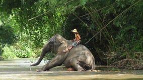 Neue Elefantpraxisshow Stockbilder