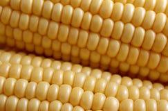 Neue Ernte des reifen, saftigen, jungen Mais lizenzfreie stockbilder