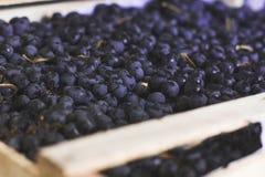 Neue Ernte von blauen Trauben in der Kiste Lizenzfreies Stockfoto