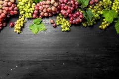 Neue Ernte von roten und grünen Trauben Stockbilder