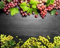 Neue Ernte von roten und grünen Trauben Stockbild