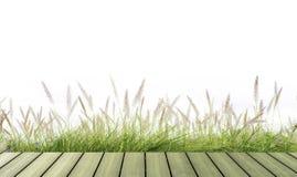 Neue Feder des grünen Grases der Blume lokalisiert Stockfotos