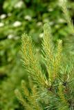 Neue gezierte Jahreszeit der Zweige im Frühjahr stockbilder