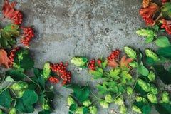 Neue grüne Herbstniederlassungen des Hopfens und der roten Beeren von Viburnum Stockfotografie