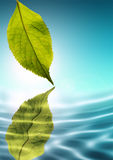 Neue grüne Natur Lizenzfreies Stockfoto