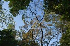 Neue grüne Zweige Lizenzfreie Stockfotos