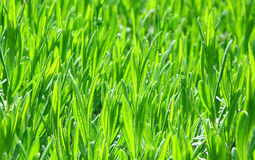 Neue Grüneintragfäden Lizenzfreies Stockbild