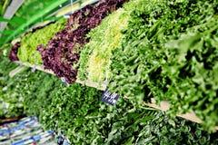Neue Grüns Lizenzfreie Stockfotografie