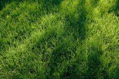 Neue Grasbeschaffenheit Lizenzfreie Stockfotografie