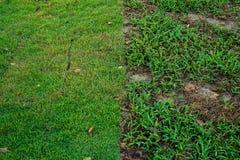 Neue Graseinpflanzung Stockfotografie