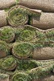 Neue Grasscholle lizenzfreie stockbilder