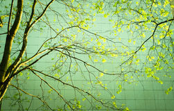 Neue Grünblätter Lizenzfreies Stockbild
