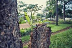 Neue Knospen auf den alten Bäumen lizenzfreie stockfotos