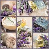 Neue Lavendelcollage stockfotografie