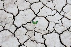 Neue Lebenanlagentrockene Bereiche, Konzept und Ideen des Fotos über Dürre Stockfoto
