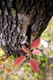 Neue Lebensdauer auf altem Baum Stockbilder