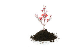Neue Lebensdauer (Wachstumkonzept) Stockbild