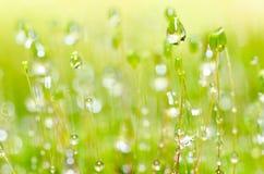 Neue Moos- und Wassertropfen der grünen Natur Stockfotografie