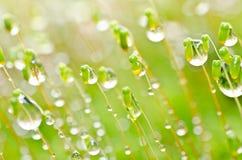 Neue Moos- und Wassertropfen der grünen Natur Lizenzfreies Stockbild