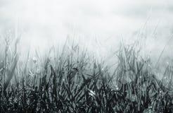 Neue Morgentautröpfchen auf einem Gras und einem Marienkäfer Natürlicher Makrohintergrund Flache Tiefe Schablone für Entwurf Rebe stockbilder