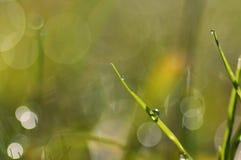 Neue Morgentautropfen auf dem Gras bild lizenzfreie stockfotos