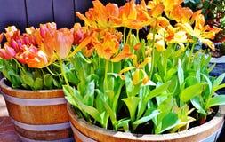 Neue orange Blüte Stockbilder