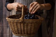 Neue süße Ernte lizenzfreies stockbild