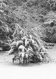 Neue Schneedecken ein Wald von Bäumen Stockbild