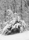 Neue Schneedecken ein Wald von Bäumen Lizenzfreie Stockfotos