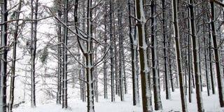 Neue Schneefälle in Illinois Stockfotos