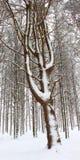Neue Schneefälle in Illinois Lizenzfreie Stockbilder